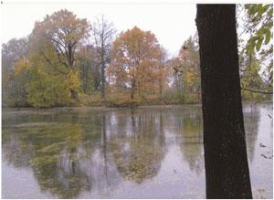 Черный пруд