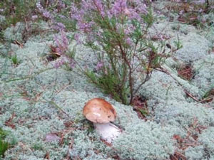 Mushrooms in our forest